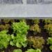 Growbox Komplettset